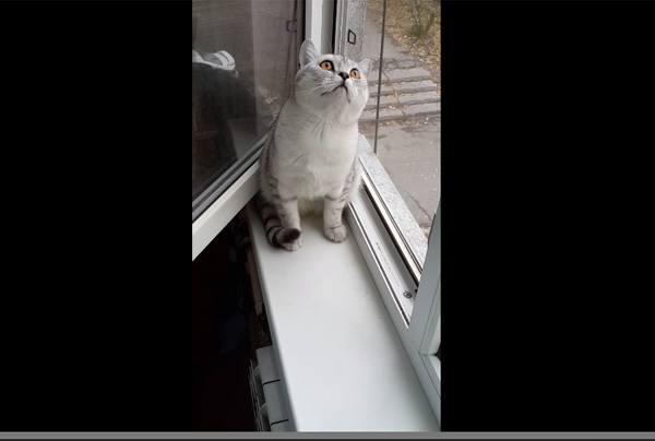 何をされても全く動かないネコの集中力がスゴすぎる【動画】