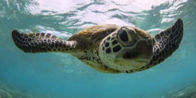 Bundaberg Turtle Tour
