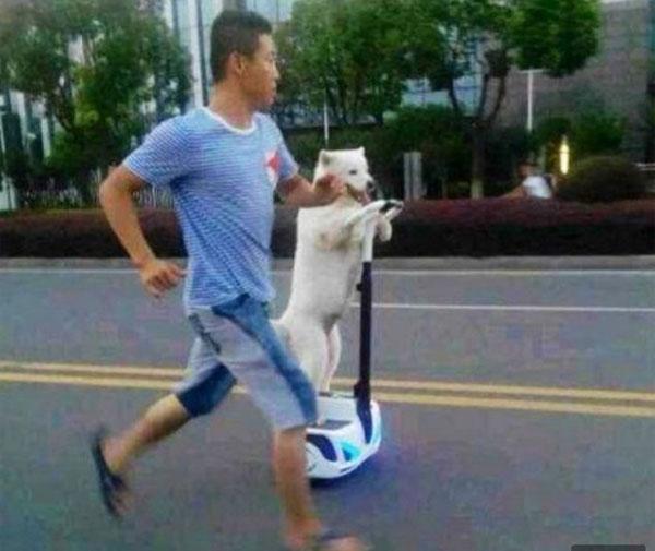 セグウェイでドヤ顔ドライブ? 飼い主と共に散歩する中国の犬が話題に
