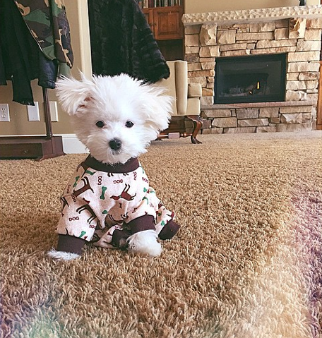 demi lovato dog in pajamas