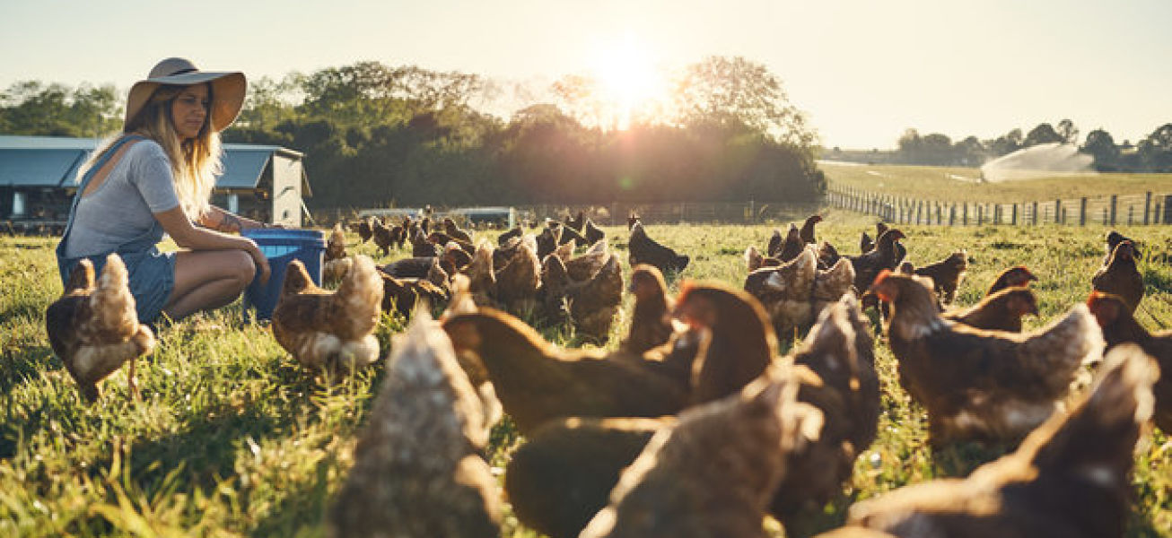 Shot of a happy young farmer feeding her flock of chickens while sitting in a field