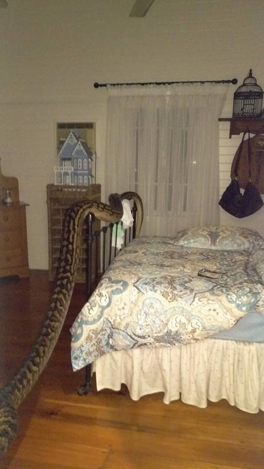 16 Foot Snake Found in Home