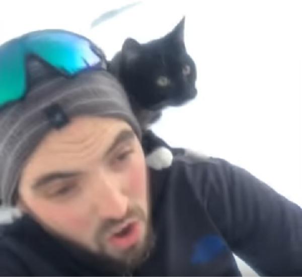 飼い主の肩に乗って一緒にソリ滑りをするネコの勇敢な姿!【動画】
