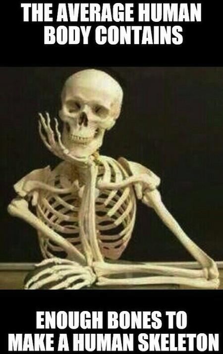 obvious facts, obvious fact memes, human body human skeleton