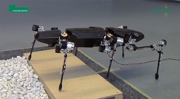 Mira los primeros pasos de este insecto palo robotizado (video)