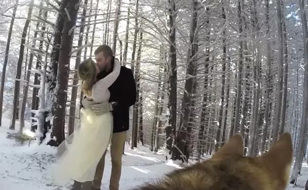 雪の中の結婚式を撮影したのはなんとワンコ!素敵すぎるウエディングビデオが話題に【動画】