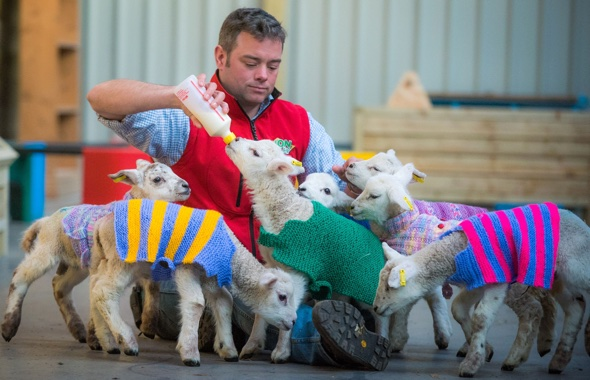 Cute pics: Mystery knitters donate jumpers for lambs