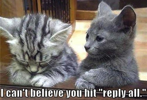 reply all fail, reply all fail cats