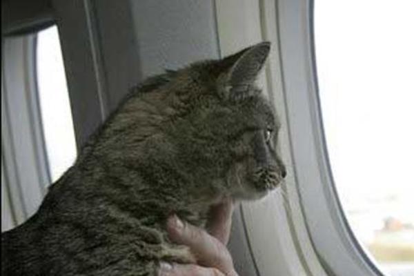 incredible animal journeys, amazing animals, emily the cat