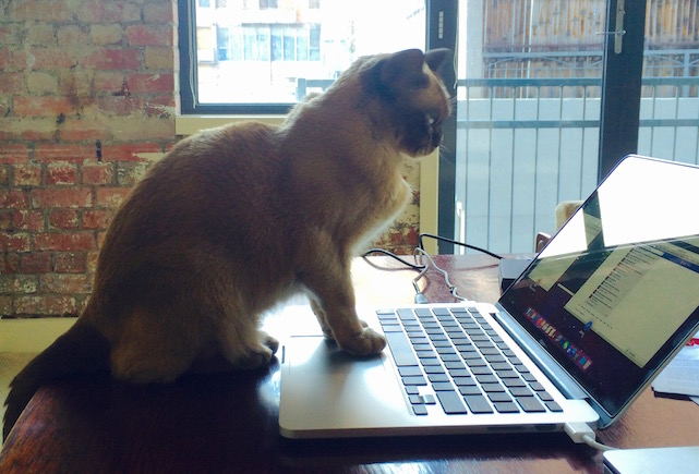 Caturday: Brown Cat knows how to use a MacBook better than you do