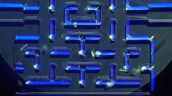 微生物の追いかけっこで再現された顕微鏡サイズのリアル『パックマン』がスゴい!【動画】