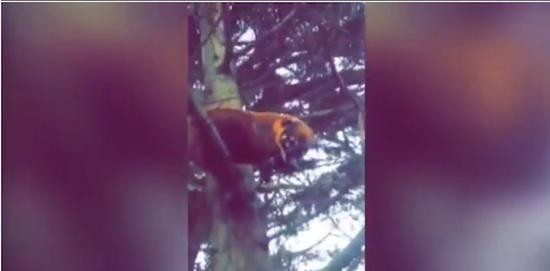 南米に生息している謎の珍獣が何故かイギリスで捕獲されて話題に【動画】