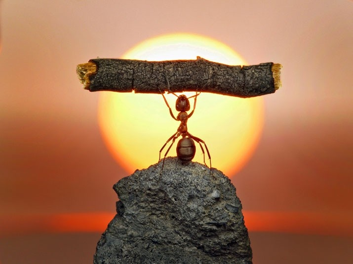 manliest photos on the internet, funny manly images, ant carries twig in sun