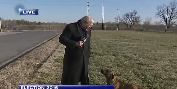 ニュースリポーターのおじさんをワンコが襲撃!大統領選中継が大混乱に【動画】