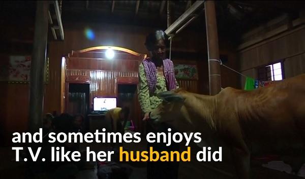 生後5ヶ月の子牛を夫の生まれ変わりと信じる話題のカンボジア女性