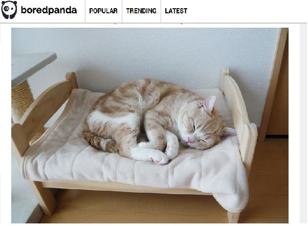 世界中のネコ好きユーザーが日本人の発想に絶賛の嵐!IKEAの人形用ベッドの使い方がスゴい