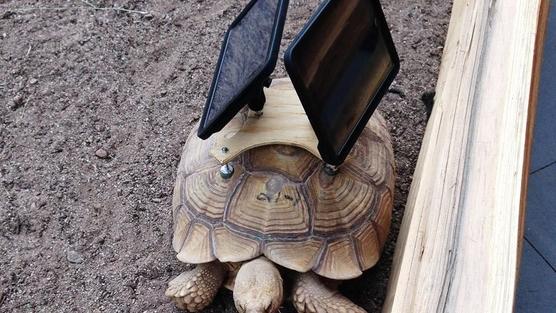 iPads on tortoise backs: Art, or just plain cruelty?