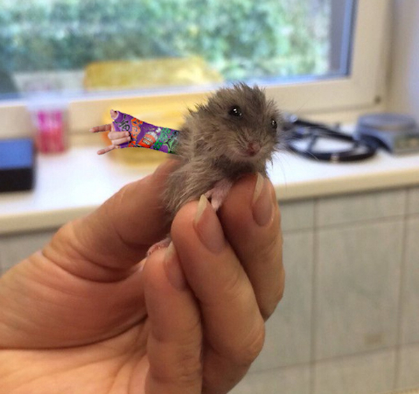 Hamster With Tiny Cast Gets The Big Photoshop Makeover It Earned