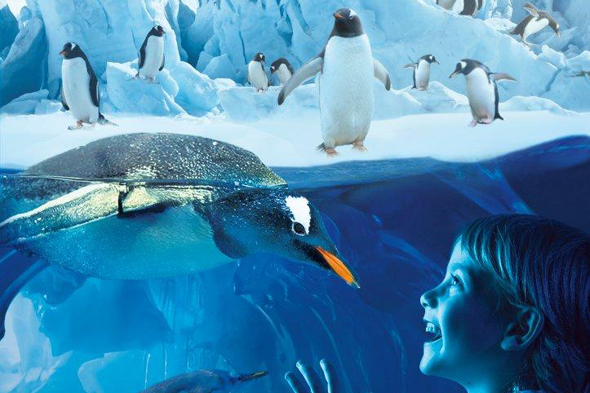 Sea Life Centre : What should we expect in Birminghams Sea Life Centre