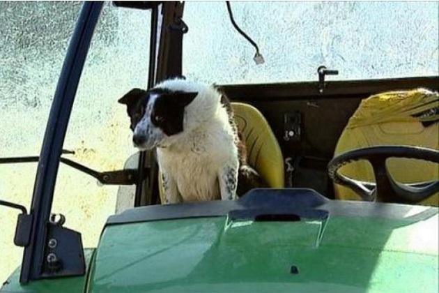 【レポート】犬しか乗っていない状態のトラクターが高速道路に侵入!