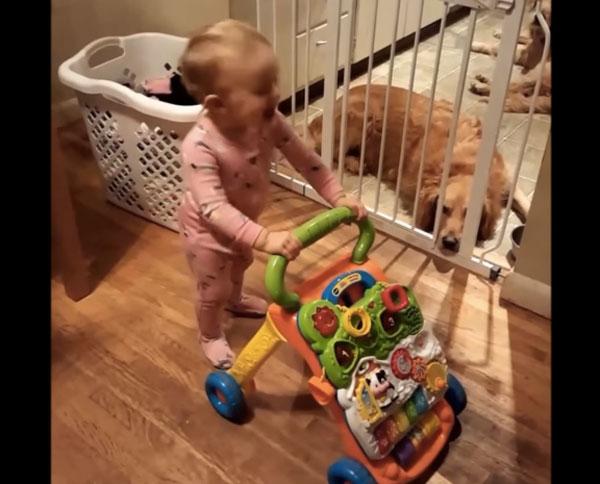 赤ちゃんがクイーンの名曲「ボヘミアン・ラプソディ」でヘッドバンギングして可愛すぎるwww【動画】