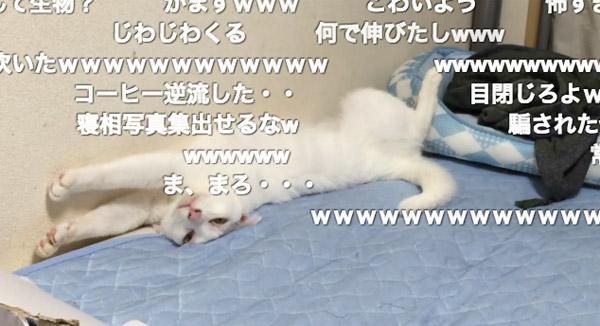 変わった寝相のニャンコがジワジワくるwww 「テトリス始まりそう」「ラスボスだこれ」【動画】