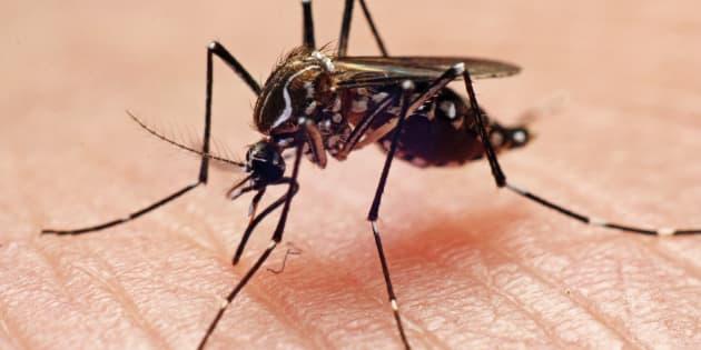 Detectado por primera vez en España un nuevo mosquito invasor de origen asiático