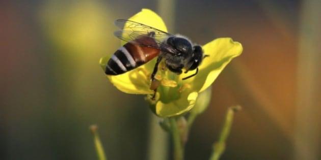 El tuit de la Policía Nacional que sorprende a muchos por lo que dice sobre si te encuentras una abeja