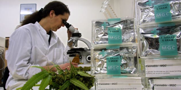 Growing Cannabis In A Organic Way
