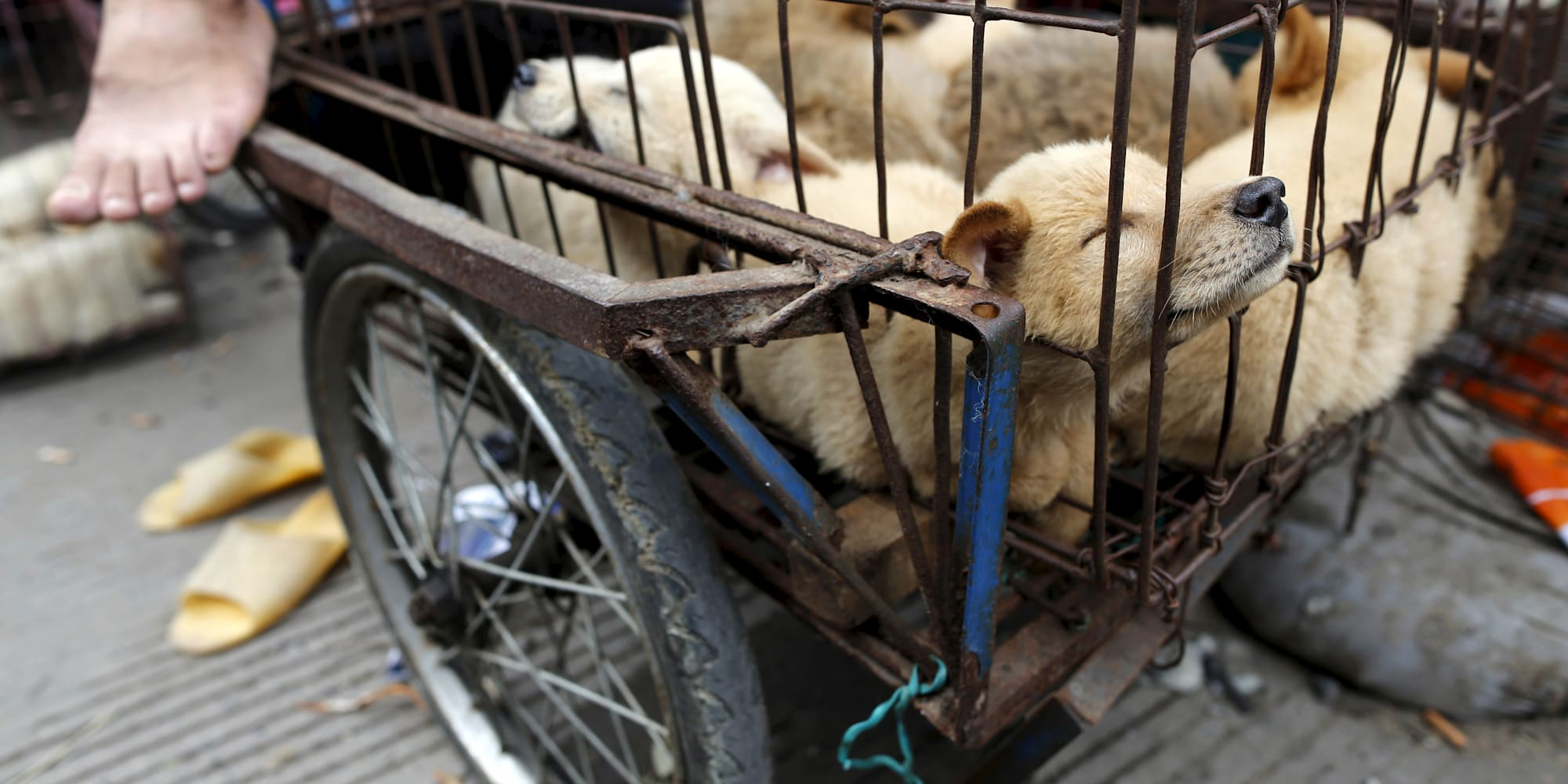 Risultati immagini per taiwan vieta l'uccisione di cani e gatti per l'alimentazione umana