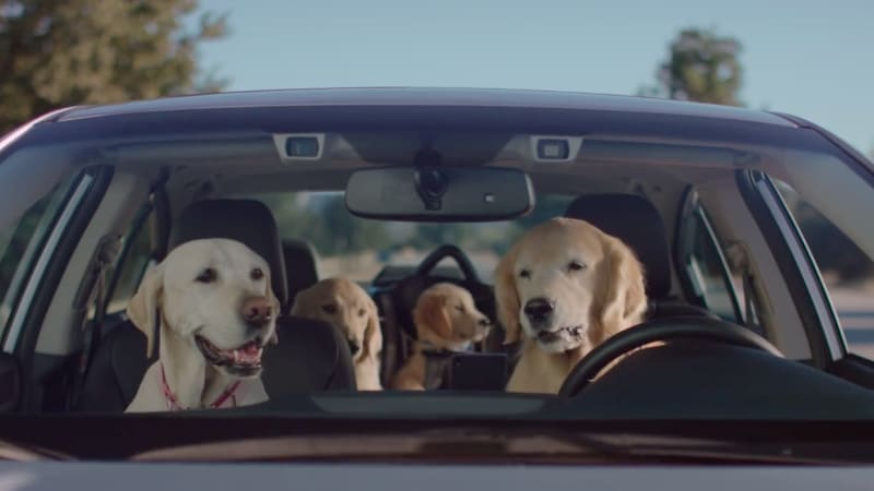 Best Dog Insurance >> Subaru skips the Super Bowl, brings back the driving dogs - Autoblog