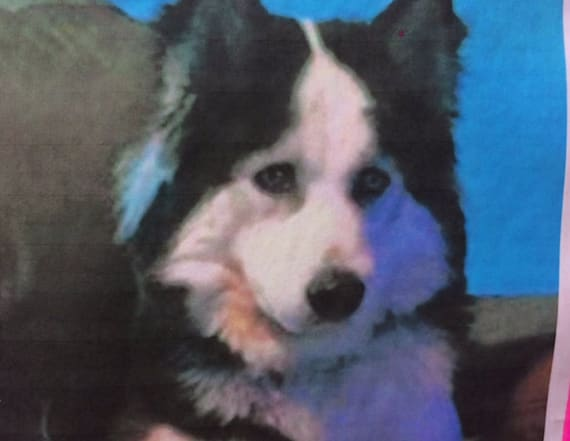 Family 'traumatized' after dog found beaten, drowned