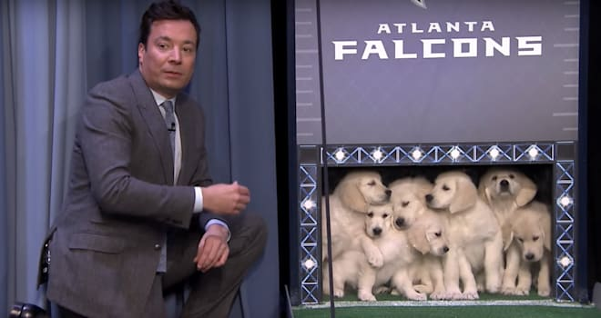 Watch Adorable Puppies Predict the Super Bowl LI Champs on 'The Tonight Show'