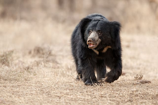Man survives three-hour Revenant-style bear attack in ...