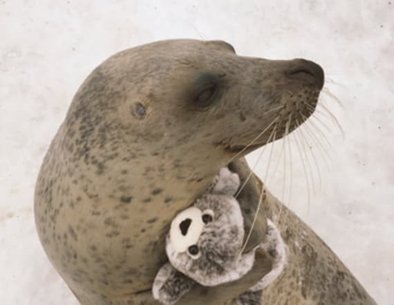Seal delightedly hugs a toy version of itself