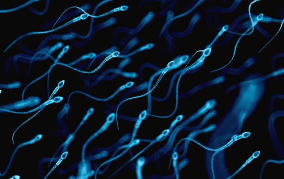 アフリカ・ソマリ族の矢毒から男性向け経口避妊薬を開発。精子活動を抑制する成分のみを合成