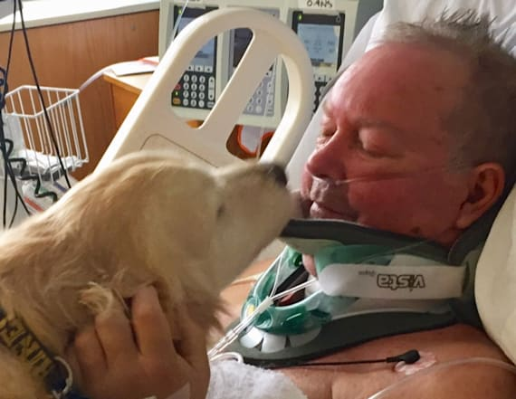 Dog helps keep owner alive after paralyzing fall
