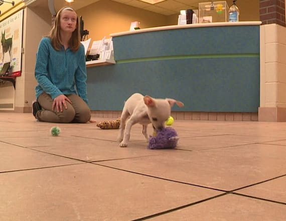 The tiniest pup in Wisconsin finds her forever home