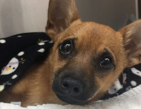 Cops save puppy that ate heroin while left in truck