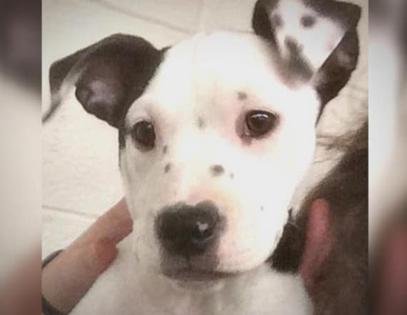 Puppy born in shelter has image of herself on ear