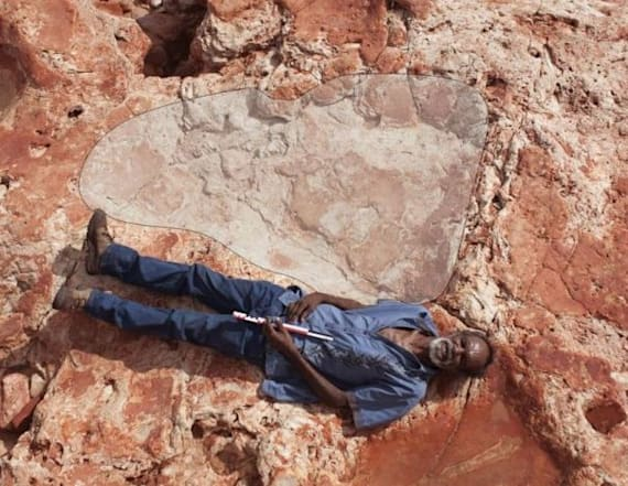World's biggest dinosaur footprints found