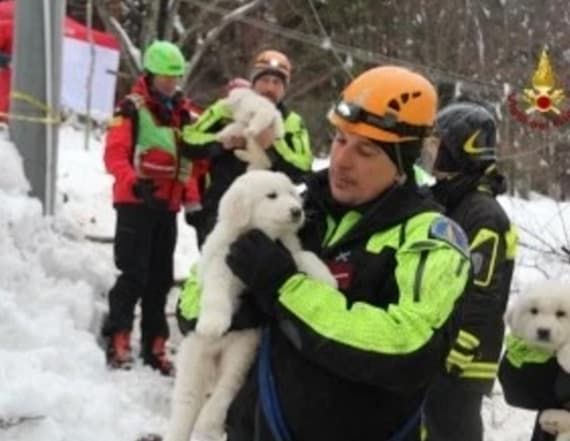 Puppies rescued at avalanche site
