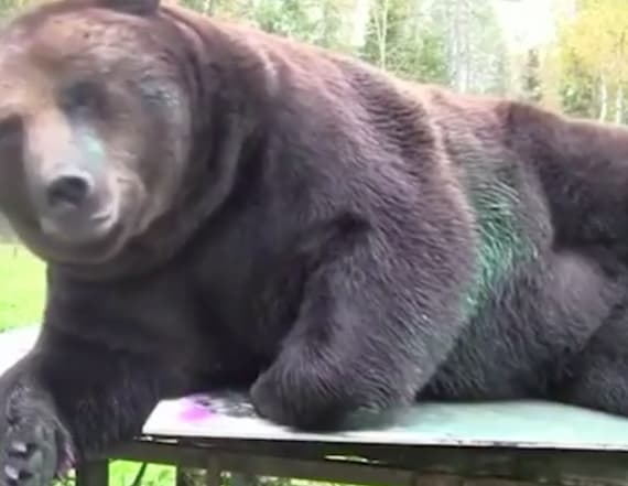 Bear makes artistic debut at Finnish gallery