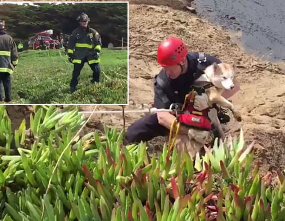 16 firefighters rescue stranded dog on cliff