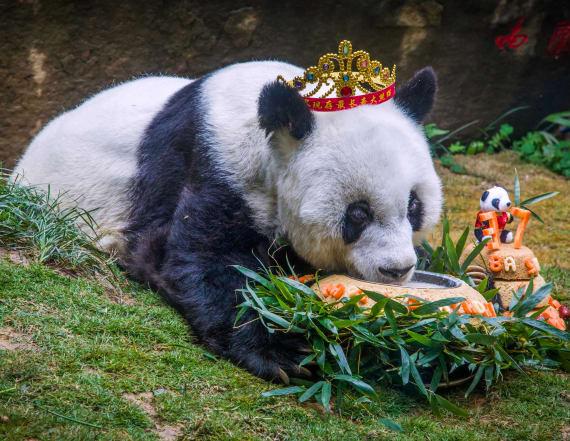 World's oldest captive panda turns 37