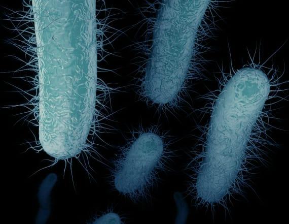 Dangerous drug-resistant superbug may be widespread