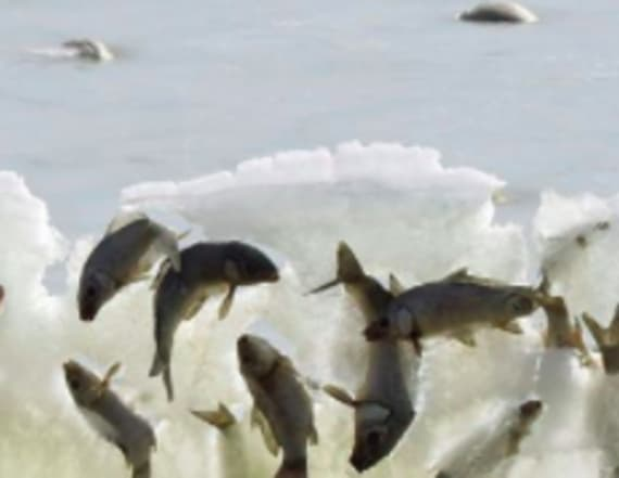 Photo of fish frozen in wave blows up social media