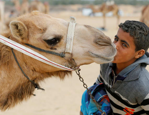 Young jockeys race camels in annual festival