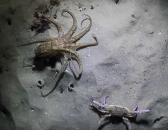 Intense octopus battle ends with a surprise