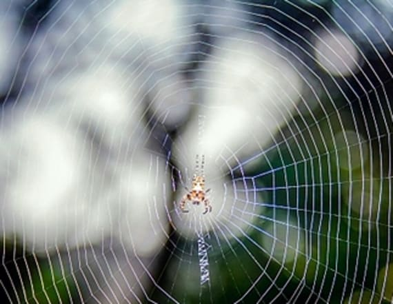 Spiders could theoretically eat every human on earth